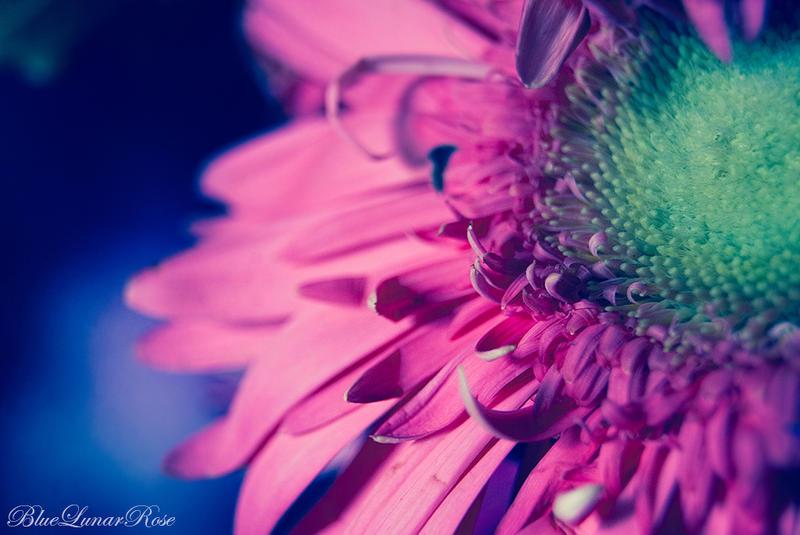 Dreams have colors... by BlueLunarRose