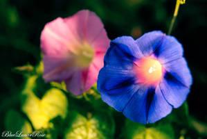 The Sound of Beauty... by BlueLunarRose