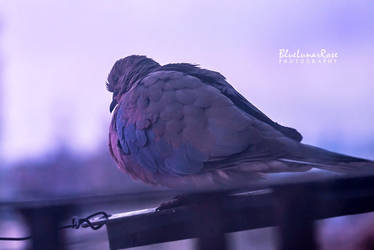 Purple Morning... by BlueLunarRose