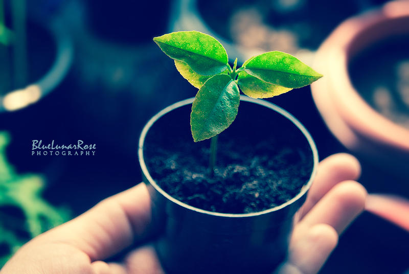 Tiny Life...