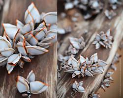 Seashell by manoolita