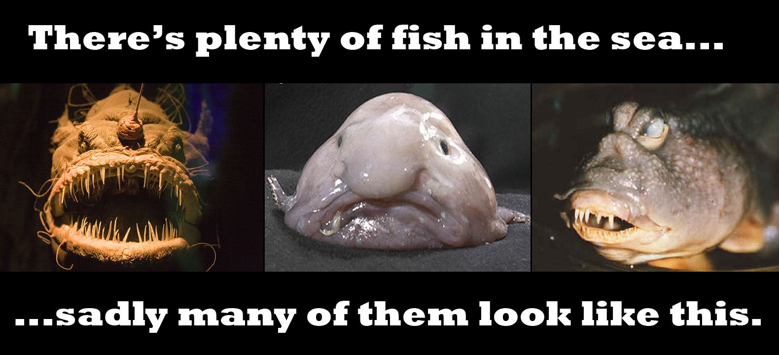 Many Fish In The Sea Dating Website