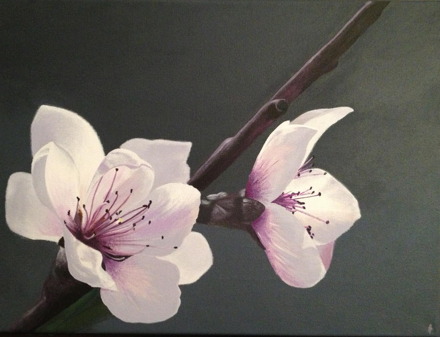 Cherry blossoms. by Li-Soro