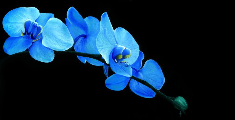 Blue Orchid by Li-Soro
