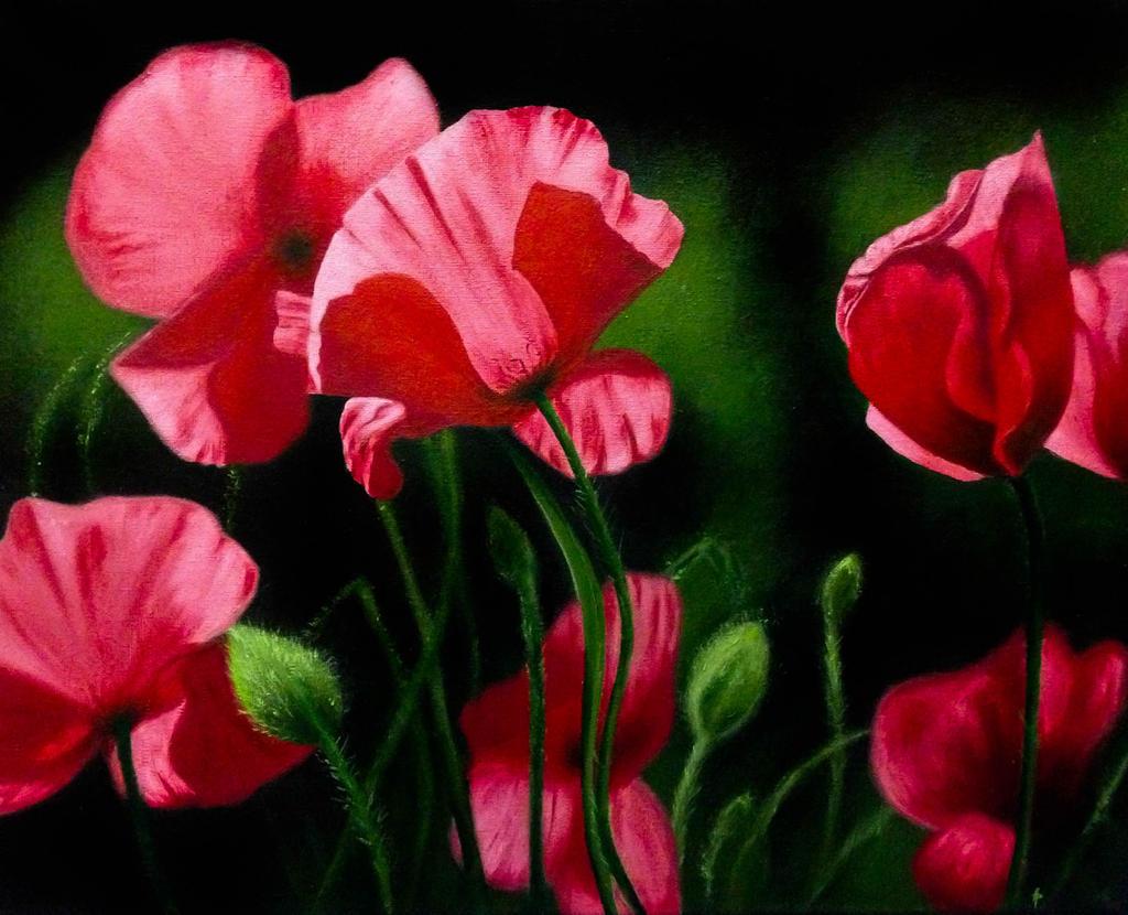 Poppy Flowers by Li-Soro