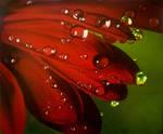 Red water drops by Li-Soro