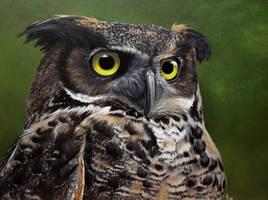 Coastal Great Horned Owl. Painting by Li-Soro