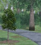 Harper Arbor Day3