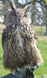 Big Owl is wathcing you...