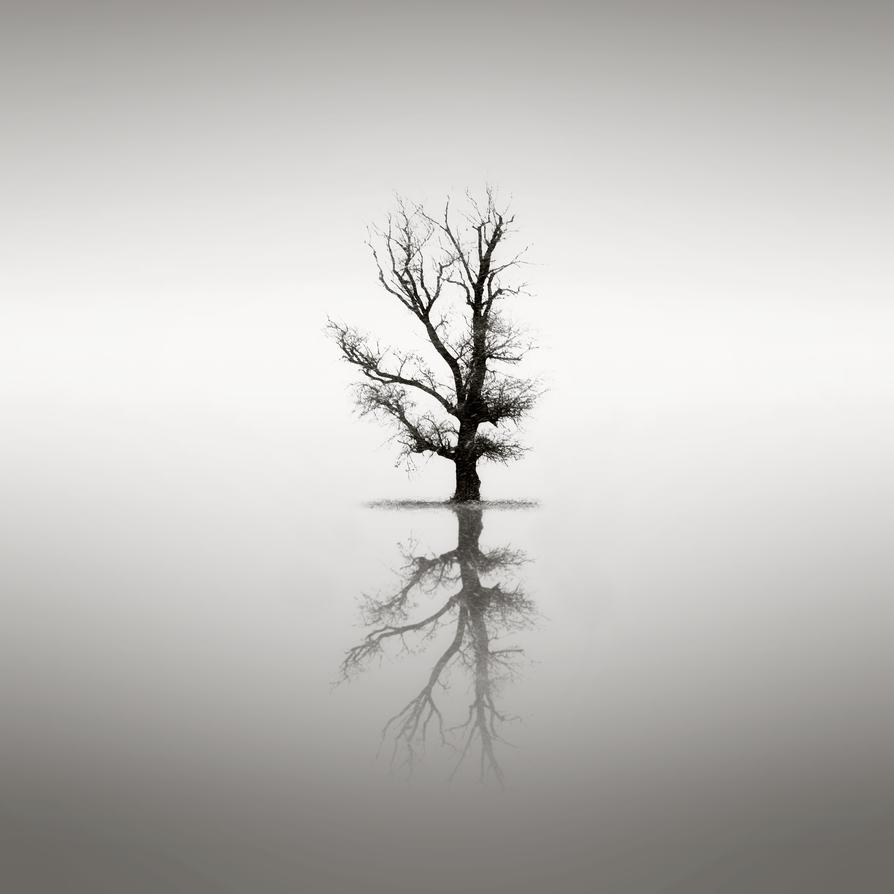 Lone reflection by vladinarium