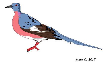 Extinct Birds Part 4: Passenger Pigeon by markthepencilguy