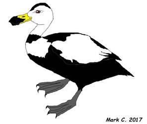 Extinct Birds Part 6: Labrador Duck by markthepencilguy