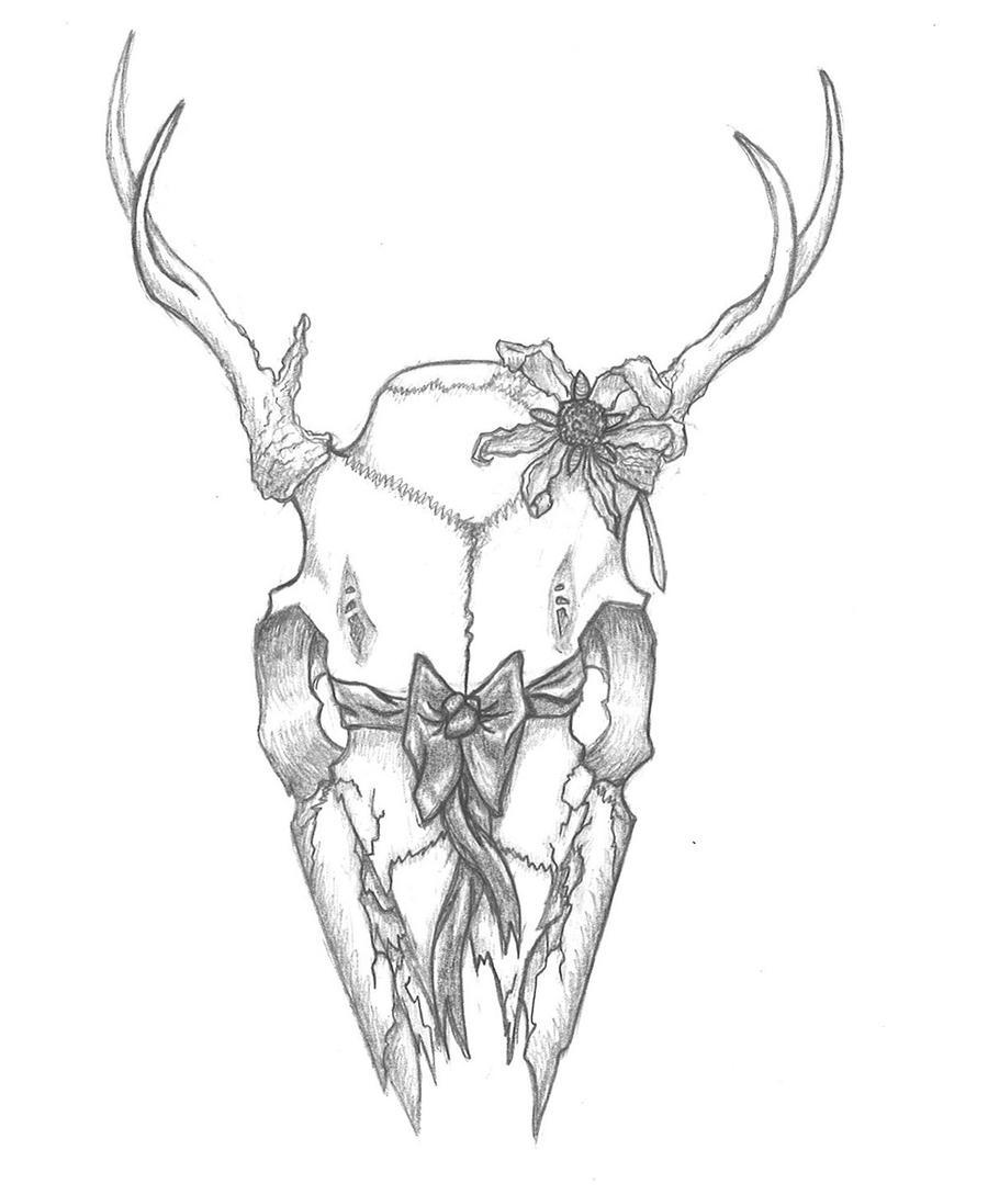 White Tail Deer Sckull Drawn: Buck Sketch By Richie Tatum