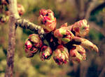 Spring Is About To Bloom