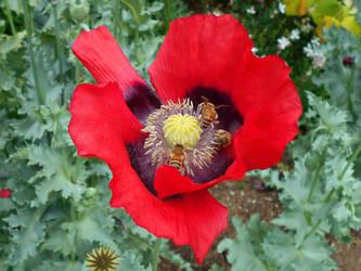 Botanical Belle