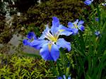 Blue Sinfonietta