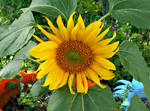 Sunflower Summer by Calypso1977