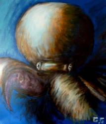 Pieuvre-Octopus