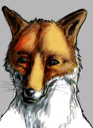 Venerable fox by Giro-Noden