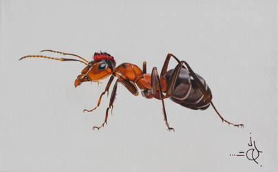 The Individual Ant