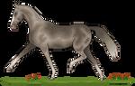 Horse Tag #1