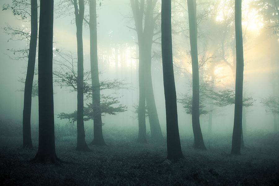 Lumino by Thinking-Silence