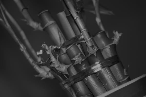 BLACK Bambus by sonderzeichen
