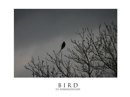 BIRD by sonderzeichen