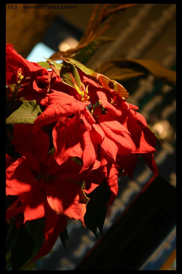 red star by sonderzeichen