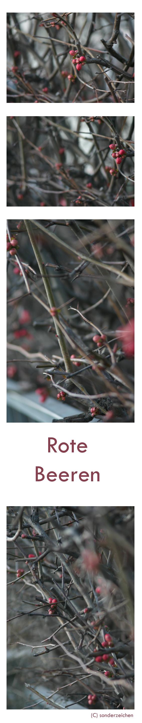 Rote Beeren by sonderzeichen