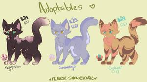 Kitty Adoptables!