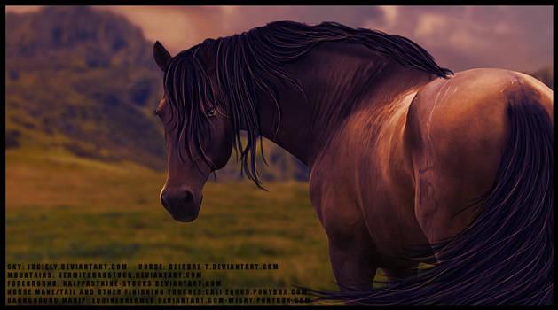 Andie Horse Pic
