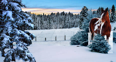 Winters Morning/Evening  -- Work In Progress