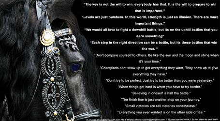 Champion Horse Pic