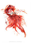 red sea hybrid