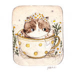 The Cat in teacup