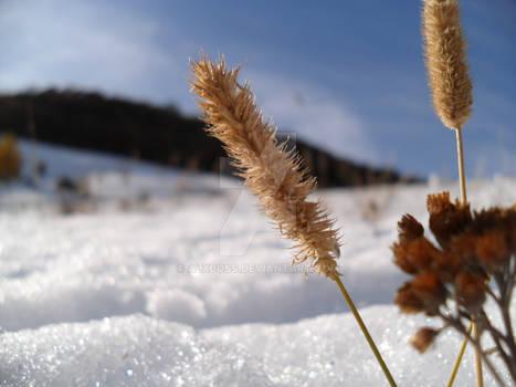 Snow et pis...