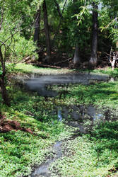 Porter Place: Spring Pond
