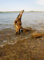 Possum Kingdom: Driftwood 2 by Stock-by-Kai