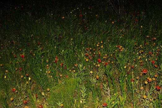 Wildflowers at Night