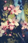 Birth of Spring 03