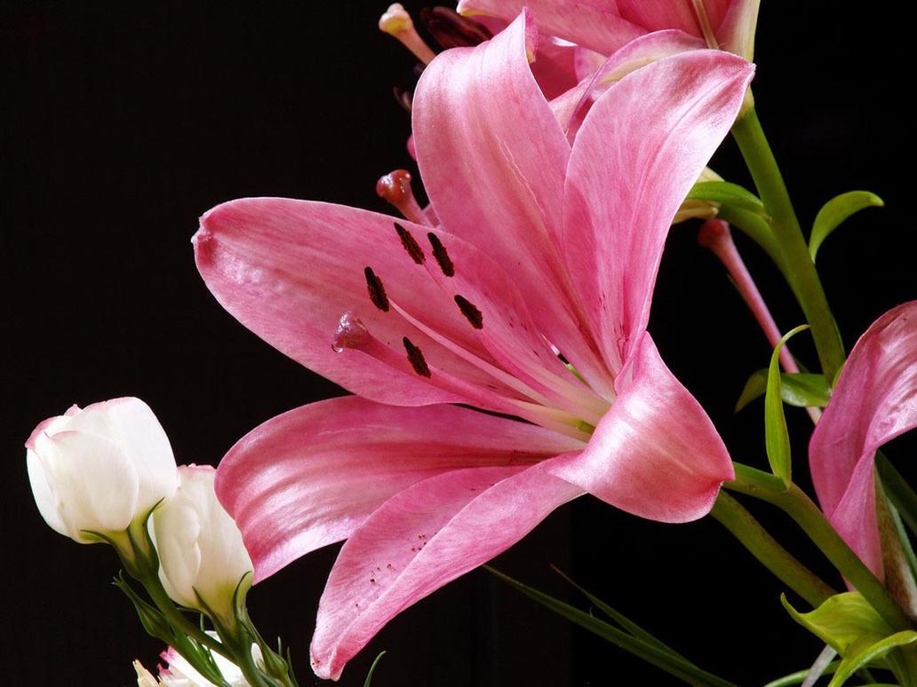 Flowers by artpak