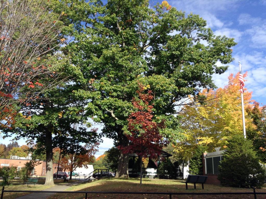 Autumn by TarmaHartley