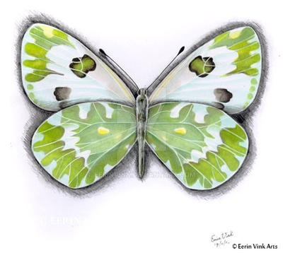 butterfly 1 with copic markers by EerinVink