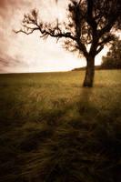 Bois d'arbre by 2jL