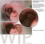 WIP - chimpanzee