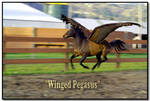 Winged Pegasus by LoneWolfPhotography