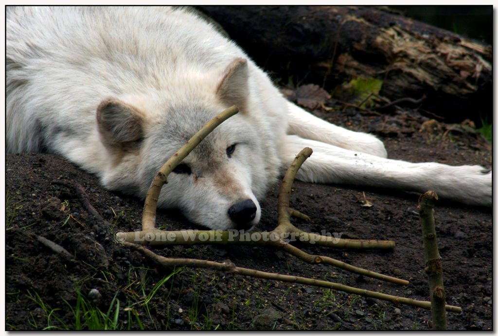 Dog Tired by LoneWolfPhotography
