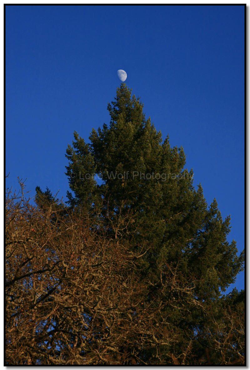 Christmas Moon by LoneWolfPhotography