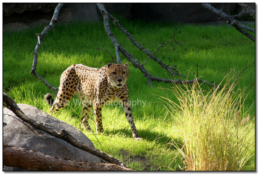 Spots in the Spotlight by LoneWolfPhotography